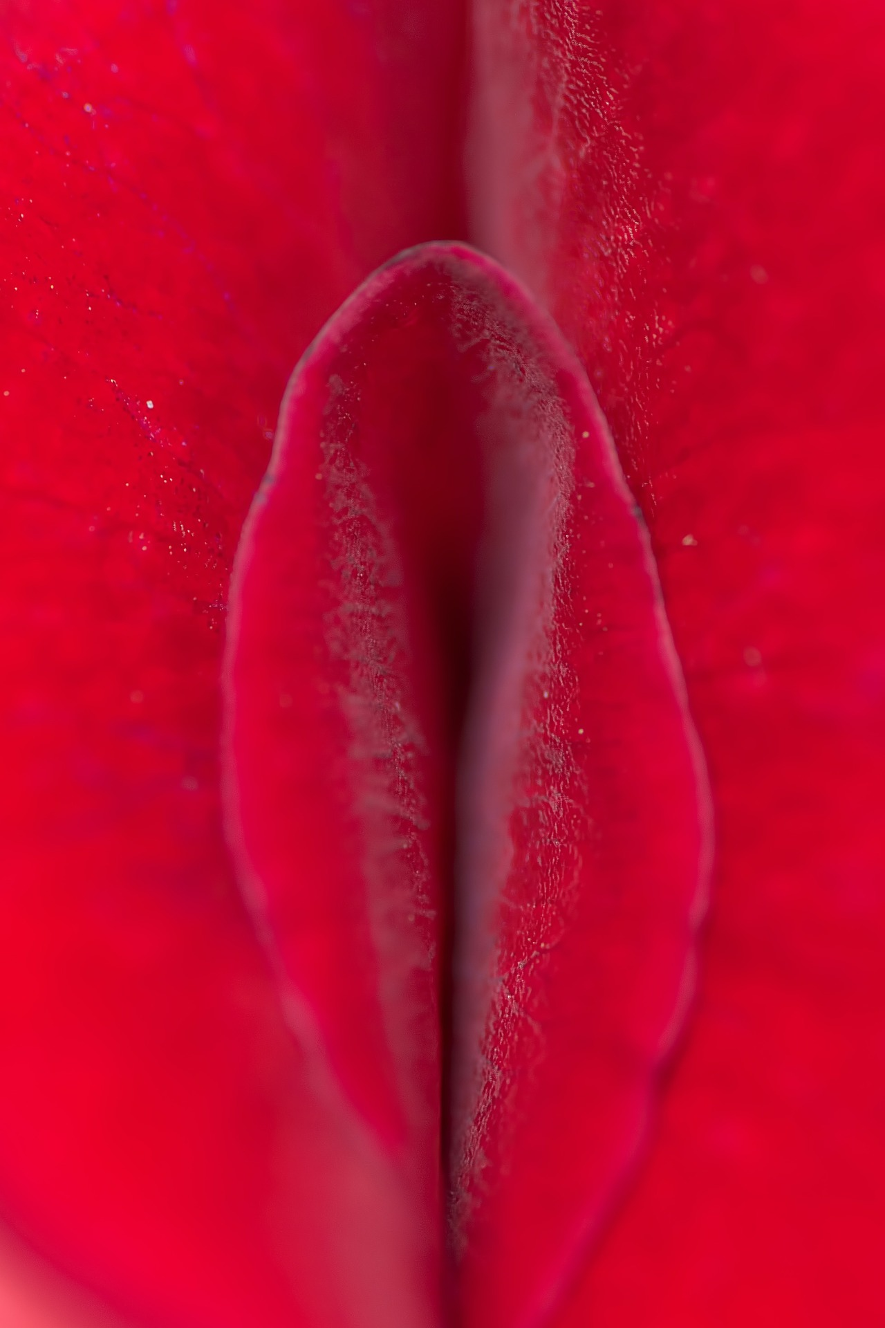 Red- rose- sexual-hygiene